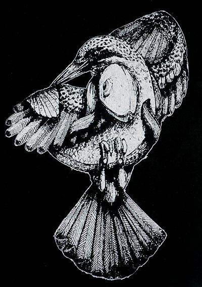 vogelfisch