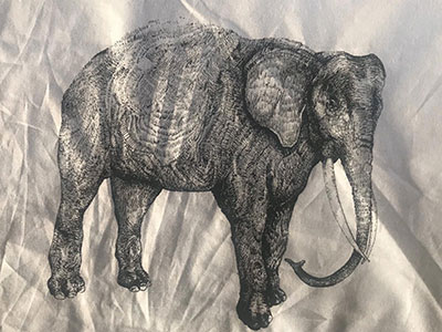 elefant_seli