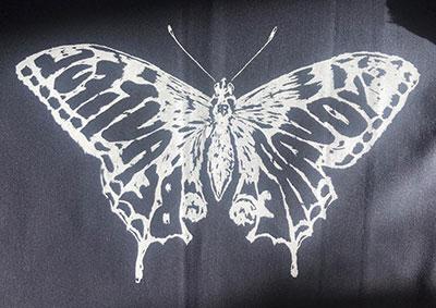 butterfliegenspiegel