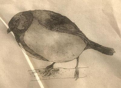 sceptical_bird